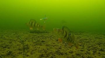 Fisch Angeln Kamera