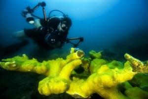 die beste Unterwasserkamera für Taucher